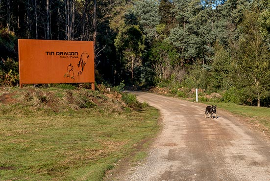Rusty the Kelpie at the entrance to Tin Dragon Cottages on her morning walk