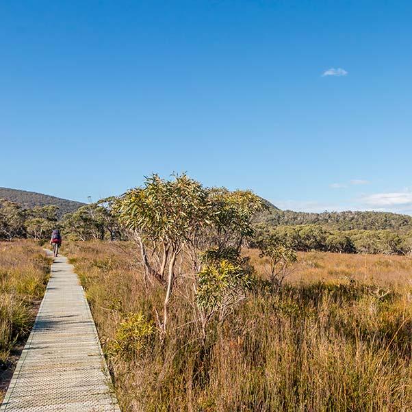 A long boardwalk cuts through flat coastal heath-land, Three Capes Track.
