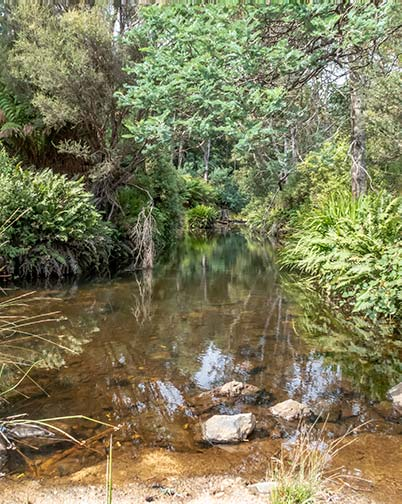 A pretty stream with clear water is surrounded by ferns: Tasmania itinerary - Derby