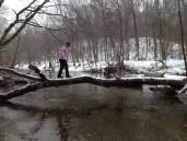3.25.12 Patapsco tree bridge