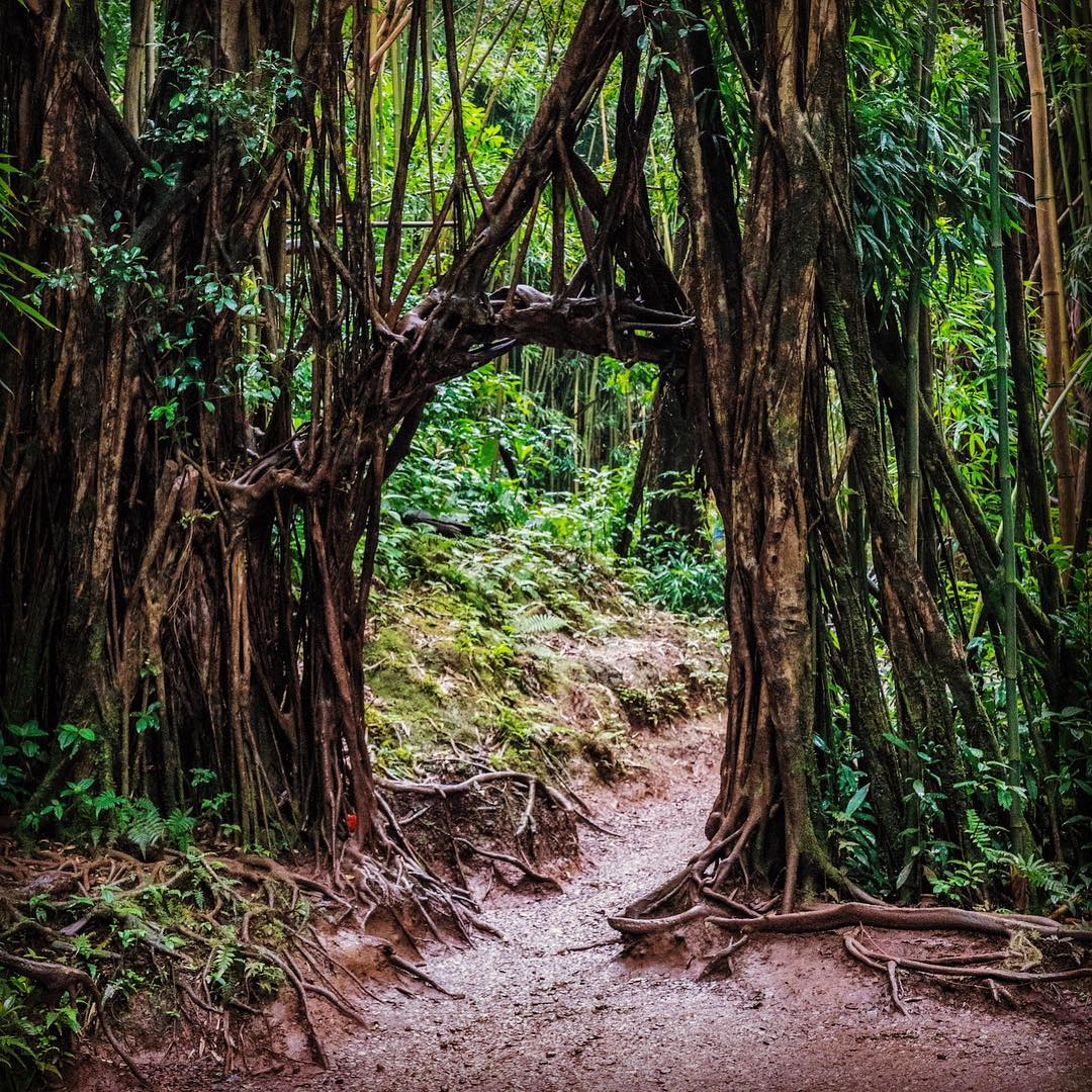 Welcome to the jungle, Manoa Falls