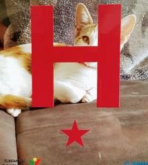 Hotel Stjerne Cat