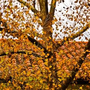 fall-015