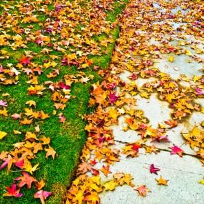 fall-020
