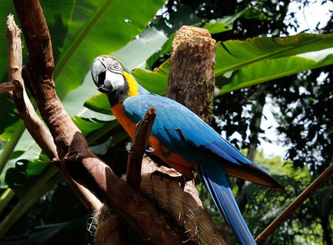 parque_aves_4