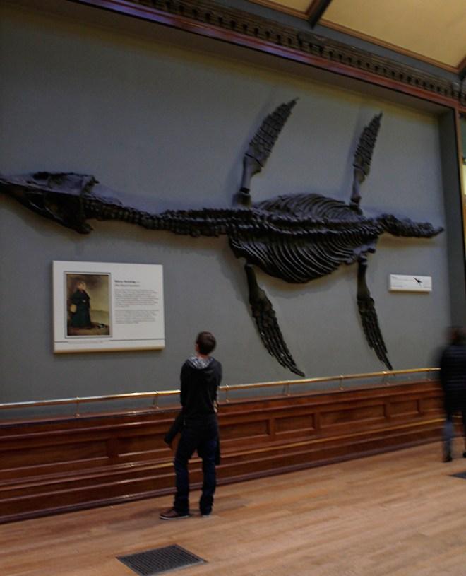museu_historia_natural_3
