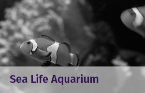 sea_life_aquarium