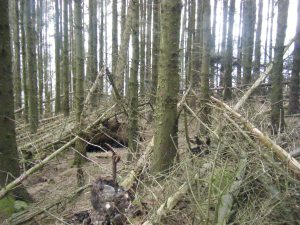 103 woodland