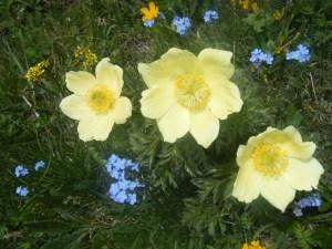 205 D5 flower