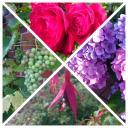 im Uhrzeigersinn : Kletter-Rose,Hortensie,Fuchsie mit Biene im Kelch,Weintraubenrebe