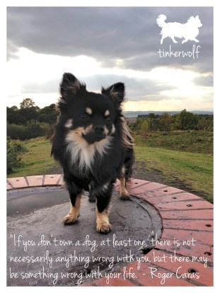 tinkerwolf dog photo quotes 27 If you don't own a dog