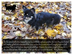 tinkerwolf dog photo quotes 30 For the animal shall not be measured by man