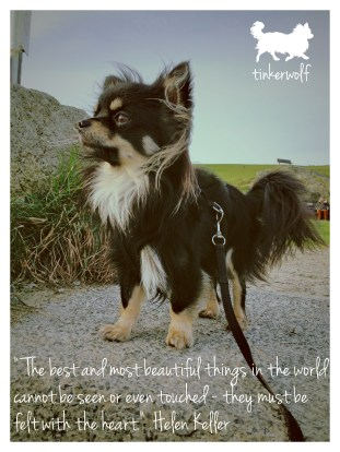 tinkerwolf dog photo quotes 41 The best and most beautiful