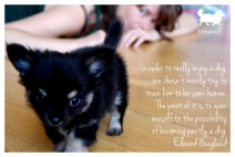 tinkerwolf dog photo quotes 46 In order to really enjoy a dog