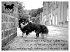 tinkerwolf dog photo quotes 62 Other animals have as much
