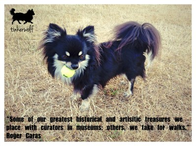 tinkerwolf dog photo quotes 63 Some of our greatest