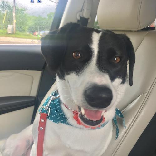 Styla Pet Results on Puppy Sammie