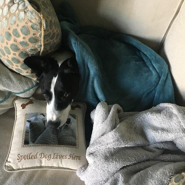 Samantha Pyrzynski Snuggly In Her Blankey And Heating Pad