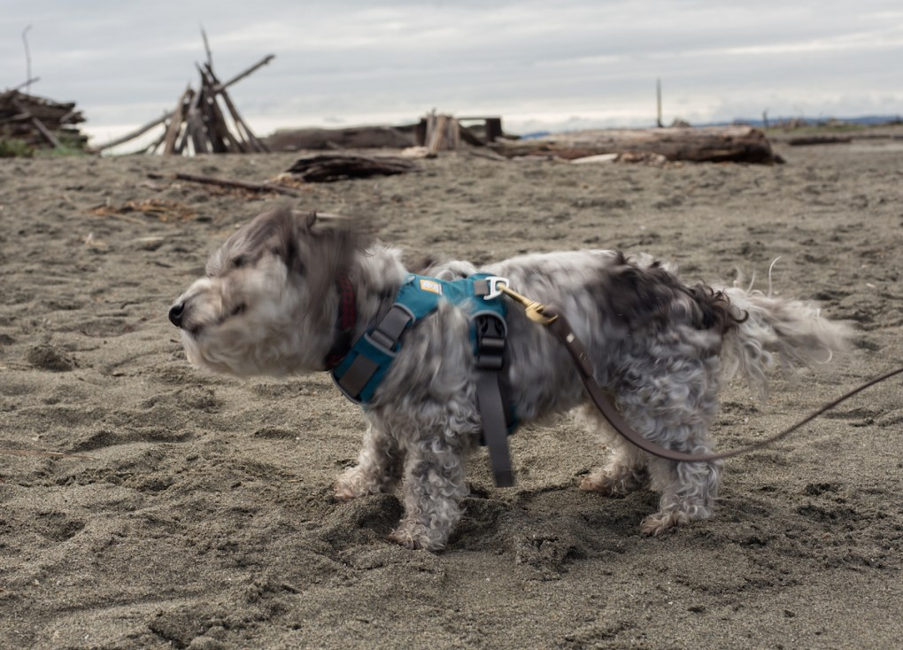 airbnb-travel-dog-whidbey