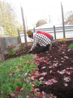 More perennial mulching at Tiny Diner Restaurant