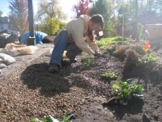 Paula planting and placing gravel.