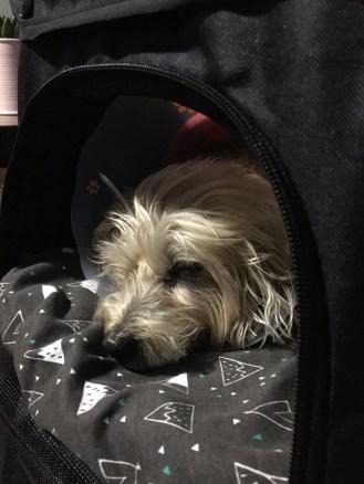 Snoozin in the comfy Vivo Pet Stroller