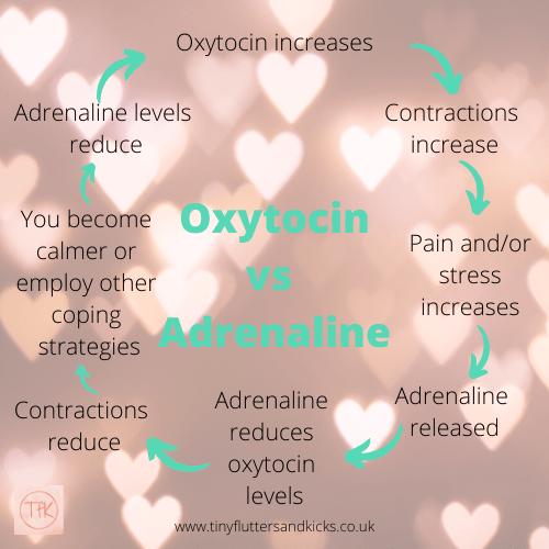 Oxytocin vs adrenaline