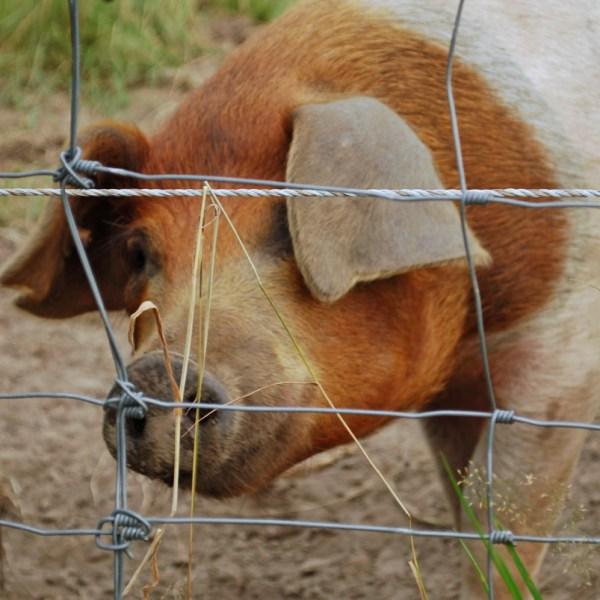 5 Gründe, die dafür sprechen, weniger tierische Produkte zu essen