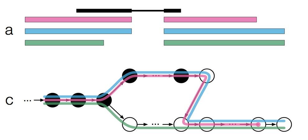 kallisto method schematic