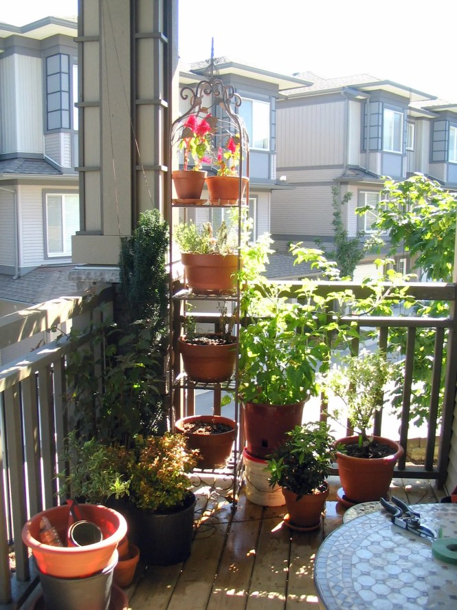 Vegetable Garden In Apartment Balcony Best Balcony Design Ideas