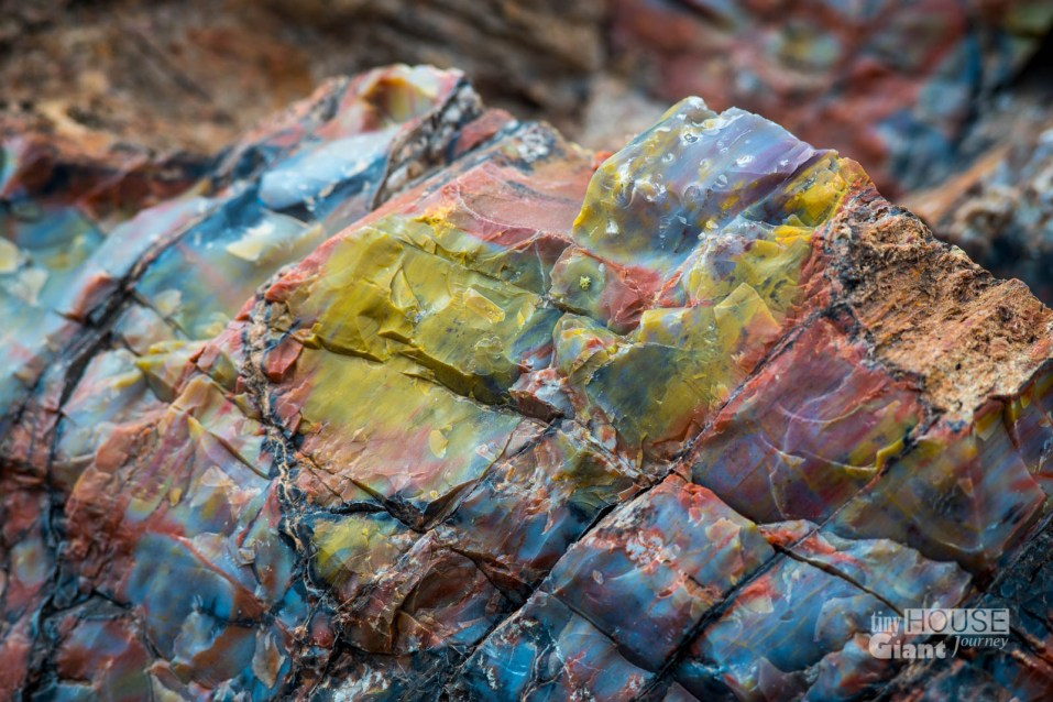 Petrified Forest - 0004