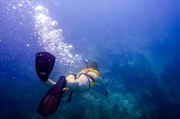 Keys Snorkeling - 0004