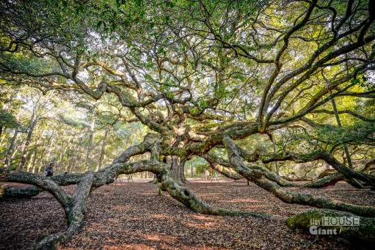 THGJ Angel Oak - 0009