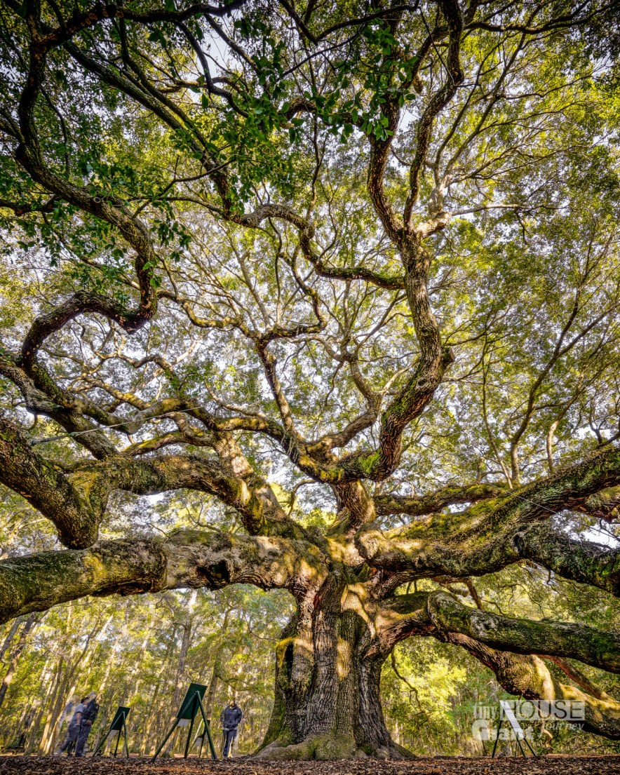 THGJ Angel Oak - 0010