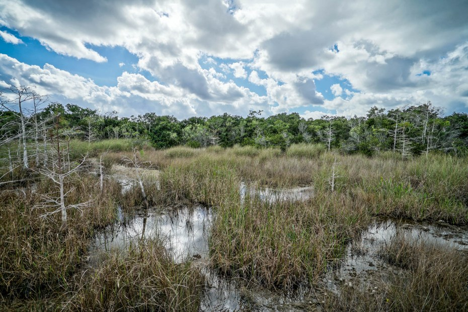 THGJ Everglades - 0003