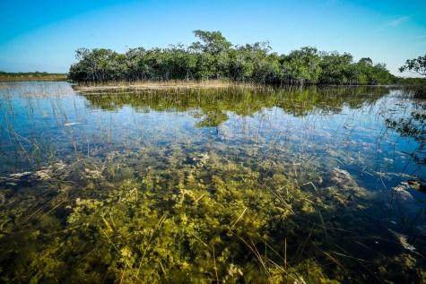 THGJ Everglades 9 Mile Pond - 0010