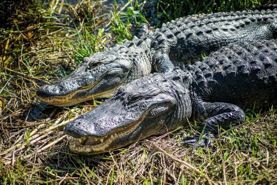 THGJ Everglades Anhinga Trail - 0022