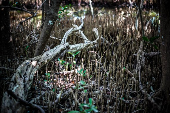 THGJ Everglades Snake Bight Trail - 0005