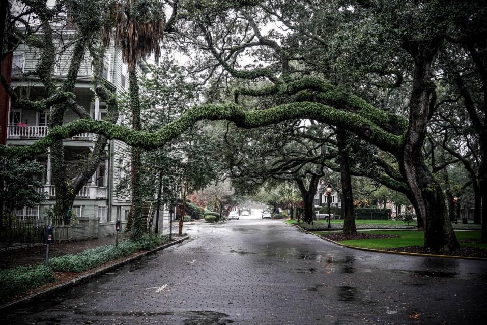 THGJ Savannah Rain - 0002