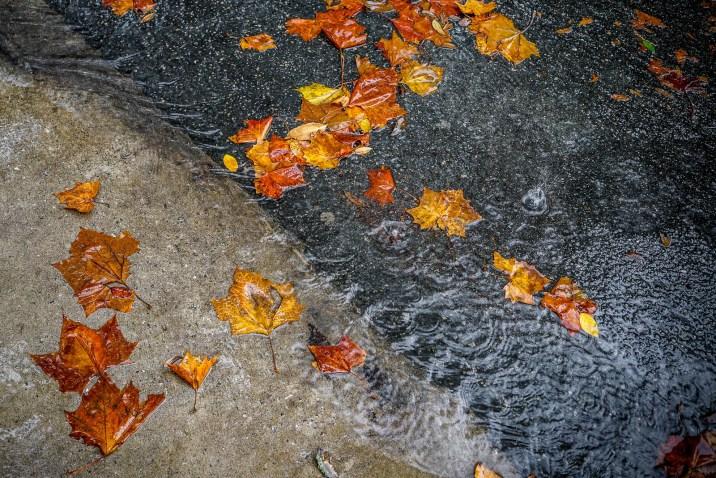 THGJ Savannah Rain - 0005