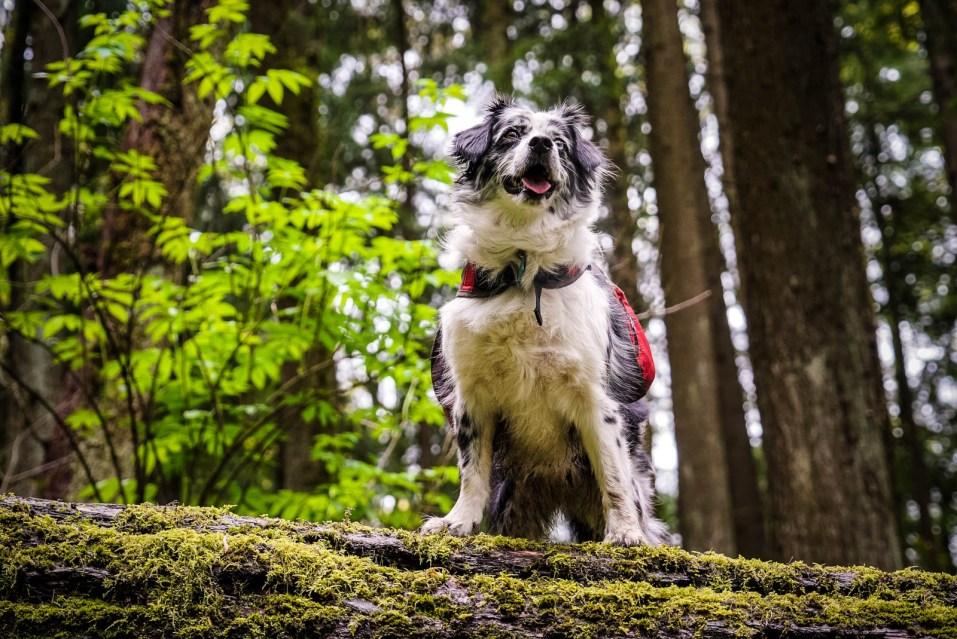 Wildwood Trail - 0002