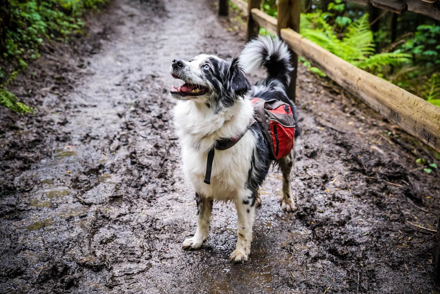Happy Dirty Dog