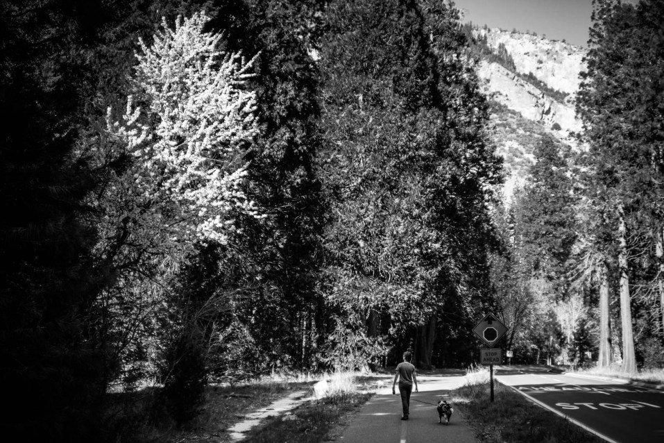 Yosemite Valley Loop