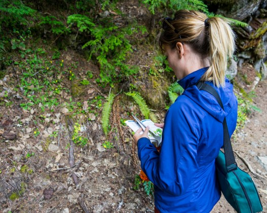 identifying Plants - Nerd Alert!