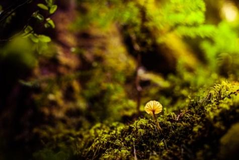 Mt Rainier Mushrooms - 0001