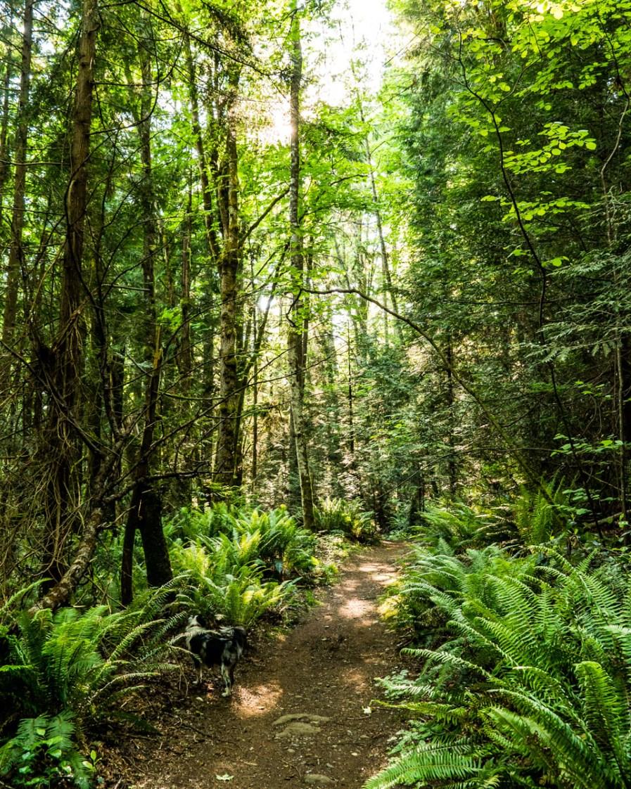 Local Hiking Trail