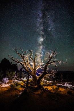 Arches Dead Tree Milky Way - 0001