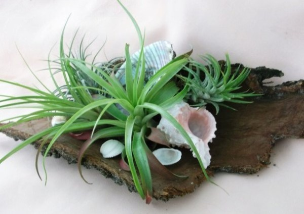 Air-Plants-for-Tiny-Houses-by-Linda-Branch-006