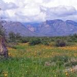 Caballos De Las Estrellas Community in New Mexico. 2