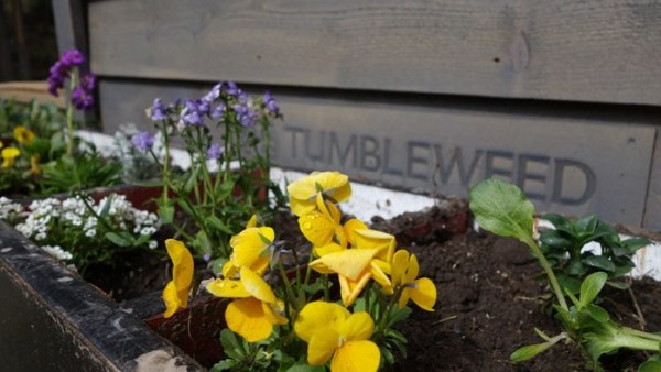 Womans Fy Nyth Tumbleweed Tiny House on Wheels 0011